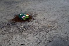 Look! Pothole Gardens   Apartment Therapy
