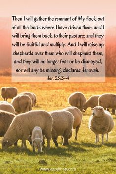 Then I will gather the remnant of My flock out of all the lands where I have driven them, and I will bring them back to their pasture; and they will be fruitful and multiply. And I will raise up shepherds over them who will shepherd them, and they will no longer fear or be dismayed, nor will any be missing, declares Jehovah. Jer. 23:3-4