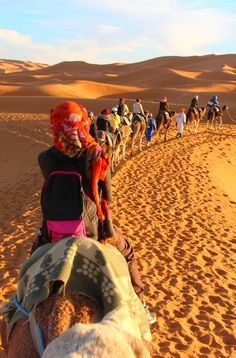 Camel trek through the Sahara Desert, Morocco. Click through for tales of misadventures!