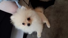 Such a cute puppy! Enter your pet to win a share of R101 000! #SouthAfrica only. #Pet competition. mymostbeautiful.com/
