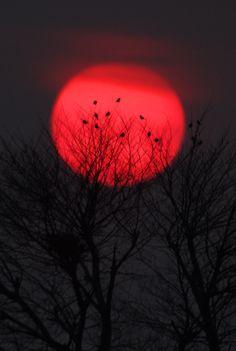 elinka:  Wrapped in the Sun by Hiroshi Horikawa
