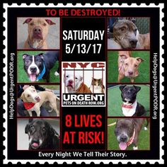 TO BE DESTROYED 05/13/17 - - Info   To rescue a Death Row Dog, Please read this:http://information.urgentpodr.org/adoption-info-and-list-of-rescues/  To view the full album, please click here:http://nycdogs.urgentpodr.org/tbd-dogs-page/ -  Click for info & Current Status: http://nycdogs.urgentpodr.org/to-be-destroyed-4915/