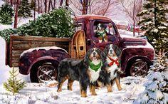 --Bernese Mtn. Dog - Bringin' in the Tree