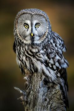 Photo Wise Stare.... by Paul Keates    on 500px