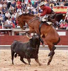 These poor animals, there are many victims in bull fighting. This is not a sport or entertainment. This is evil and sick!