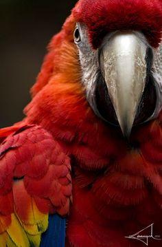 Margarita, Mitch's five-year-old scarlet macaw