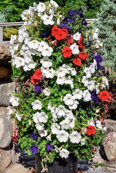 Jotkut meistä ovat syntyneet vihreän peukalon kanssa ja vain tietävät miten saada aikaan kauneimpia kukkaistutuksia. Mutta tämä projekti on meille, joilla ei ole ideaa miten tehdä niitä.