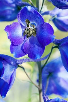 Blue Garden, Close Up, Plants, Animals, Products, Animales, Animaux, Animal, Plant