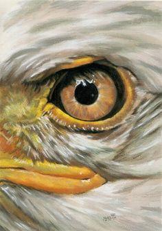 Eagle Face, Eagle Head, Eagle Painting, Phoenix Painting, Terrarium Reptile, Eagle Drawing, Eagle Pictures, Les Reptiles, Cat Aesthetic