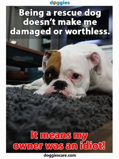 Being a rescue #dog doesn't make me damaged or worthless. It means my owner was an idiot!