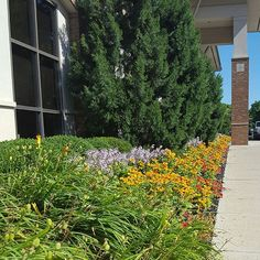 Perennials and annuals in bloom at one of our commercial maintenance properties