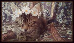 kitten cat crown headband pet costume tiara wreath show photo prop puppy dog animal daisy flower hippie boho accessories