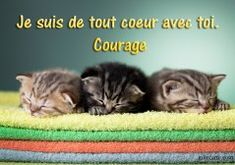 Bon Courage, Encouragement, Messages, Happy, Sentiments, Animales, Get Well Cards, Map Pictures, Pretty Cards