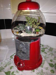 Succulent terrarium DIY made from used bubble gum machine:)
