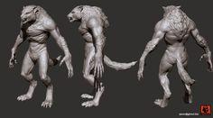 Werewolf shape reference, anatomy