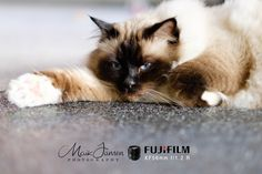 Welkom Fujifilm