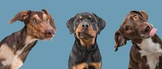 Professional pet photography by Elke Vogelsang based in Germany. My clients include ad agencies, pet brands, magazines and TV channels. Pet Photographer, Companion Dog, Prehistoric Animals, Nature Animals, Brighten Your Day, Dog Pictures, Animal Photography, Hanging Out, Cute Animals