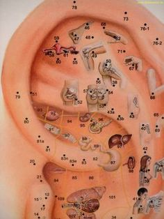Ucho a orgány Point Acupuncture, Acupuncture Benefits, Health And Nutrition, Health And Wellness, Health Fitness, Yoga Fitness, Ear Reflexology, Nail Salon And Spa, Health Chart