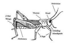 INSECT FACTS -- Exploring Nature Educational Resource
