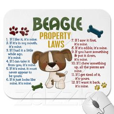 If only I had done some real research before adopting my beagle 8 years ago. This is exactly her.