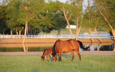 The North Texas Horse Country, one of the largest concentrations of horse farms in the United States, offers a variety of breeds and disciplines making this area a mecca for professional horsemen and horse enthusiasts from all over the world.