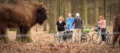 Faciliteiten - Charme Camping Hartje Groen Noord-Brabant