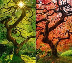same-place-different-season-before-after-coverimage