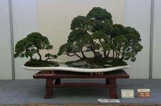 West Art, Bonsai, Plants, Plant, Planets, String Garden