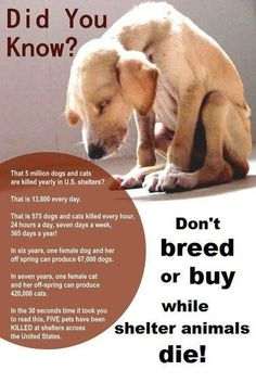 Don't breed or buy while shelter animals die!