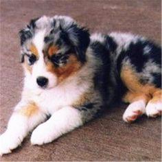 37 Best Medium Sized Dog Photos of Popular Cute Medium Sized Dogs