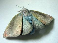 Let's keep it wild.: Cloth moth