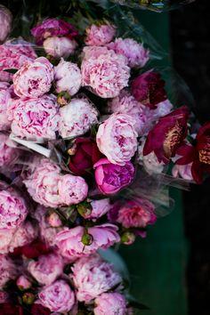 bucket of pink peonies #peonies #pink
