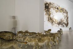 "Cai Guo-Qiang takes an interesting look at pack mentality with his amazing installation piece, ""Head On"". Striking in its size and energy, ""Head On"" consists of ninety-nine life-like wolves constructed from metal wires, painted sheepskins and hay, running as a pack through the length of an empty white room, only to crash headfirst into a glass wall, to then fall stunned and lifeless to the ground.  http://www.artfido.com/blog/cai-guo-qiangs-head-on-a-pack-of-wolves-find-an-abrupt-end/"