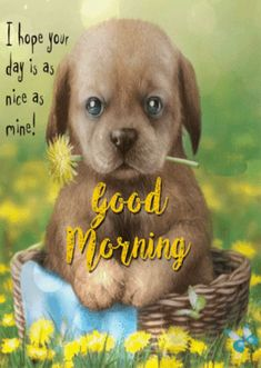 ads ads Good Morning Puppy GIF – GoodMorning Puppy Cute – Discover & Share GIFs gif All gif playback time of shares varies… Good Morning Puppy, Good Morning Animals, Cute Good Morning Quotes, Good Morning People, Good Morning My Friend, Good Morning Inspirational Quotes, Good Morning Picture, Good Morning Messages, Good Morning Greetings