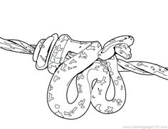 Anaconda Snake Coloring Pages - Beware of sensitive souls, that all those who hate these legless reptiles close their eyes because there are snake coloring pictures to print! Snake Coloring Pages, New Year Coloring Pages, Coloring Pages For Girls, Mandala Coloring Pages, Coloring Pages To Print, Free Printable Coloring Pages, Free Coloring Pages, Coloring Books, Dibujo