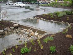 UNIVERSITY OF Massachusetts AT AMHERST Rain Garden: 2010  The rain garden cleans water from one of the largest parking lots on the UMass campus