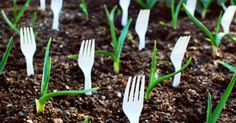 20 Insanely Clever Gardening Tips And Ideas. Not everyone has green fingers. Use these clever gardening tips and ideas to help you garden this spring. PIN & READ LATER Take away the green and there sits my garden. Gardening Supplies, Gardening Tips, Garden Projects, Garden Tools, Garden Crafts, Garden Hose, Plastic Forks, Dream Garden, Garden Beds