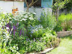 背の高い植物は花壇に欠かせない存在 | OliveGardening Forest Garden, Garden Paths, Garden Landscaping, Path Design, Small Space Gardening, Green Garden, Green Flowers, Go Green, Herbs