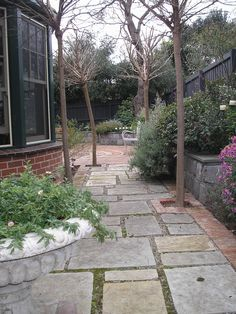 Random paving accommodating existing trees, leading out onto circular courtyard