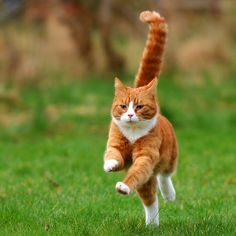 Cute Kitten Pics, Kittens Cutest, Cats And Kittens, Pretty Cats, Beautiful Cats, Last Game Manga, Chat Maine Coon, Cat Reference, Dancing Cat