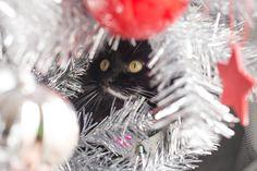 Slinky Malinki up the tree (by Cat Macnaughtan)