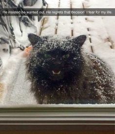 The Best Funny Pictures Of Today's Internet