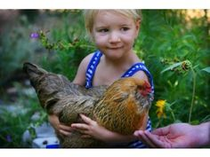 Murrieta council approves new rules for backyard chickens Murrieta council approves new rules for backyard chickens Calliope Clark holds her pet Dump Truck in her Riverside backyard on Friday, July 29, 2016. The Clarks were surprised to find out Riverside doesn't have rules on the books for backyard chickens and the family is lobbying the city to change the code to allow them as pets.