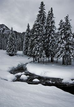 Winter -Stream & evergreens - Les Mosses II