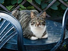 What's for dinner? by RavenMontoya on deviantART Old Cats, Cats And Kittens, Cat Sitting, Domestic Cat, Pretty Cats, Cat Food, Cat Lady, The Great Outdoors, Haha