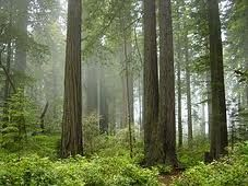 Redwood National Park in California. Went camping there. Loved it!