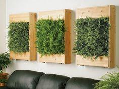 box frame wall planters