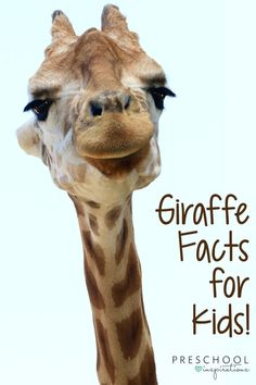 """Parents, teachers, and children gave us a """"tall"""" order when they asked for some giraffe facts for kids. Though this challenge will """"stretch"""" us a bit, you will come out """"head and shoulders above""""… More Giraffe Facts For Kids, Fun Facts About Giraffes, Animal Facts For Kids, Jungle Animals, Baby Animals, Baby Giraffes, Wild Animals, Science Experiments For Preschoolers, Preschool Science"""