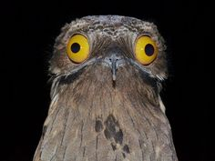 This bird who is definitely not on drugs.   16 Birds You Won't Believe Actually Exist