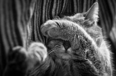 The Mysterious Lives Of Cats Captured In Black And White Photography via Bored Panda